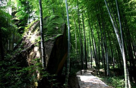 中国茶山竹海国家森林公园